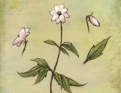Simbelmyne illustration